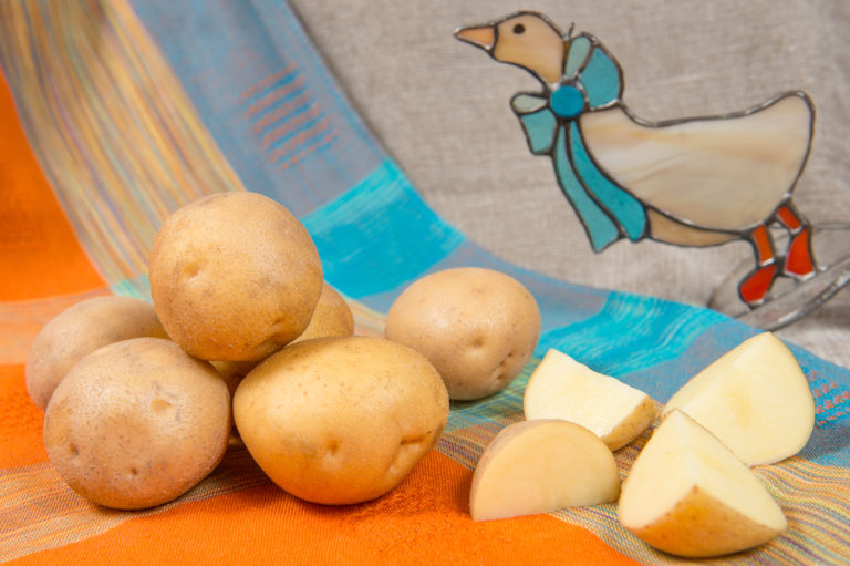 Kartoffelsorte Bila mit HZ Zamarte