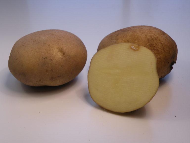 Kartoffelsorte Cedron mit HZ Zamarte