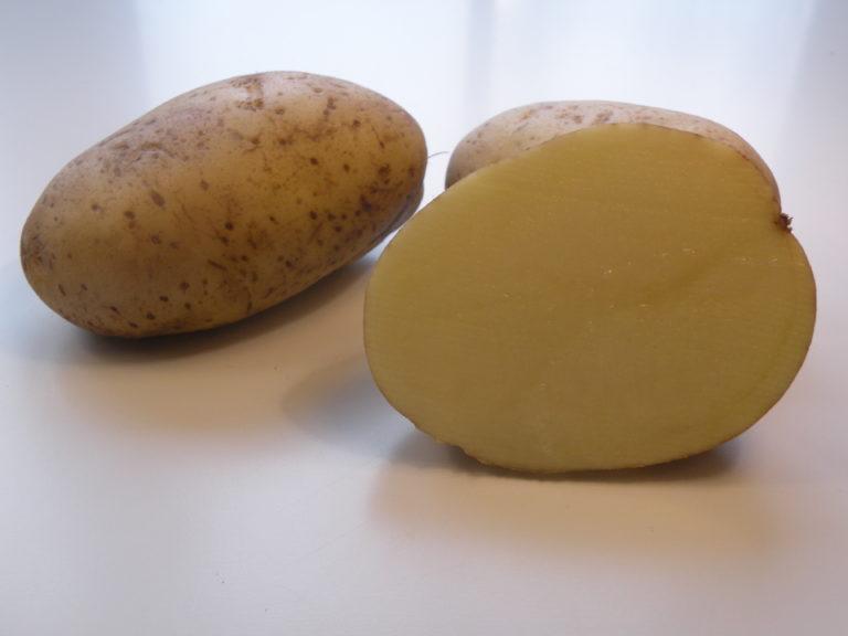 Odmiana Ziemniaka Finezja z Hodowli Ziemniaka Zamarte