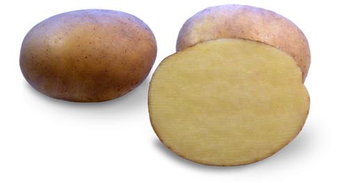 Kartoffelsorte Irmina mit HZ Zamarte