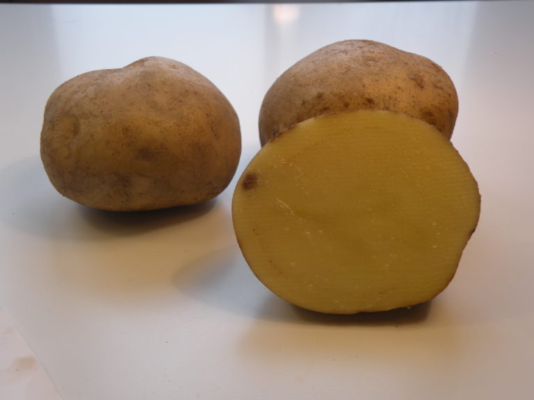 Odmiana Ziemniaka Jasia z Hodowli Ziemniaka Zamarte