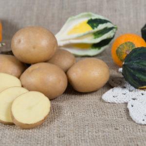 Odmiana Ziemniaka Jurek z Hodowli Ziemniaka Zamarte
