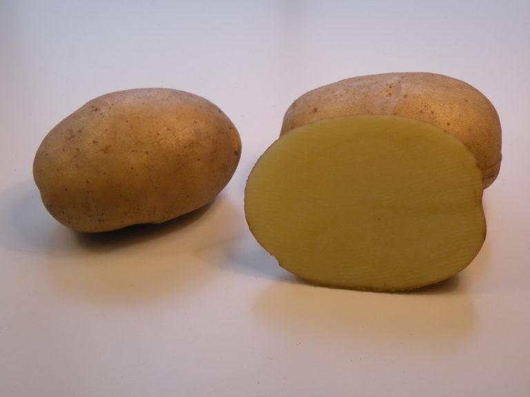 Kartoffelsorte Kuba mit HZ Zamarte