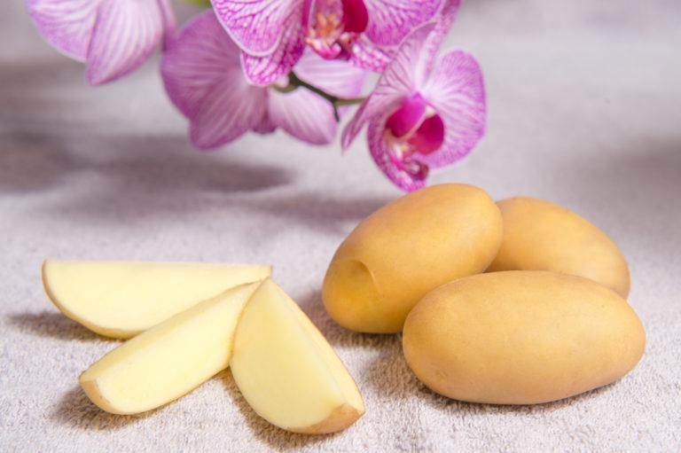 Kartoffelsorte Malaga mit HZ Zamarte