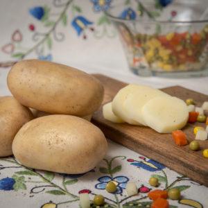 Odmiana Ziemniaka Tacja z Hodowli Ziemniaka Zamarte