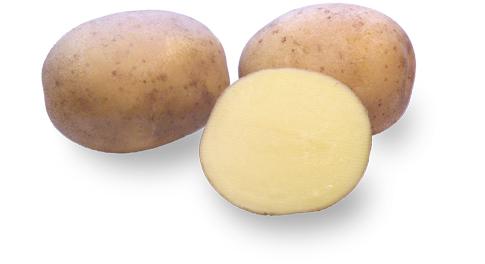 Kartoffelsorte Werbena mit HZ Zamarte