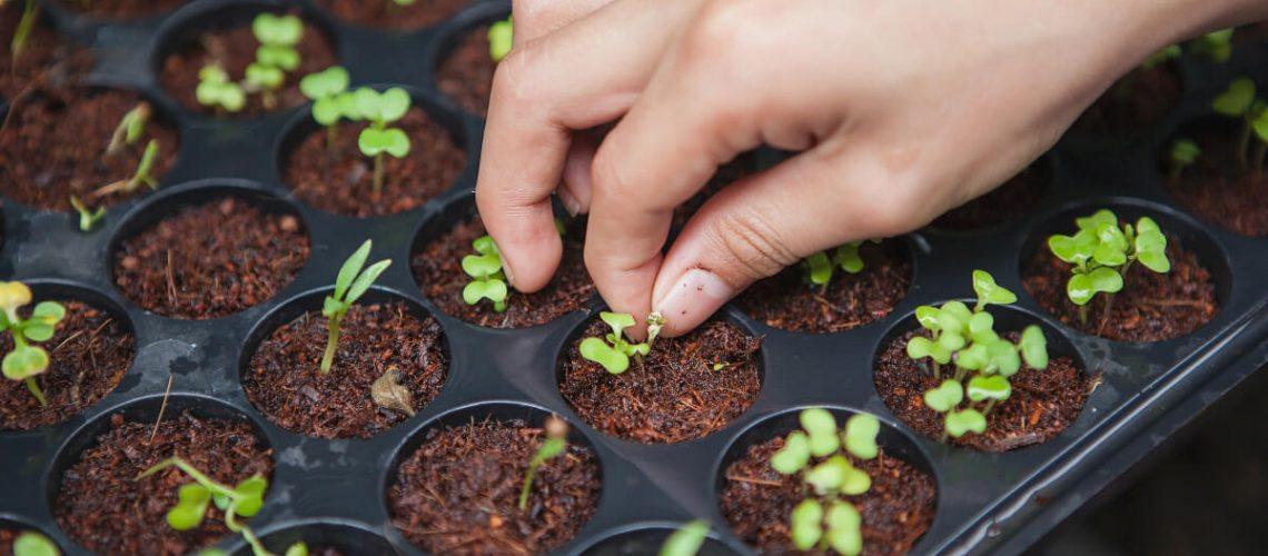 horticulturist-seeding-plants