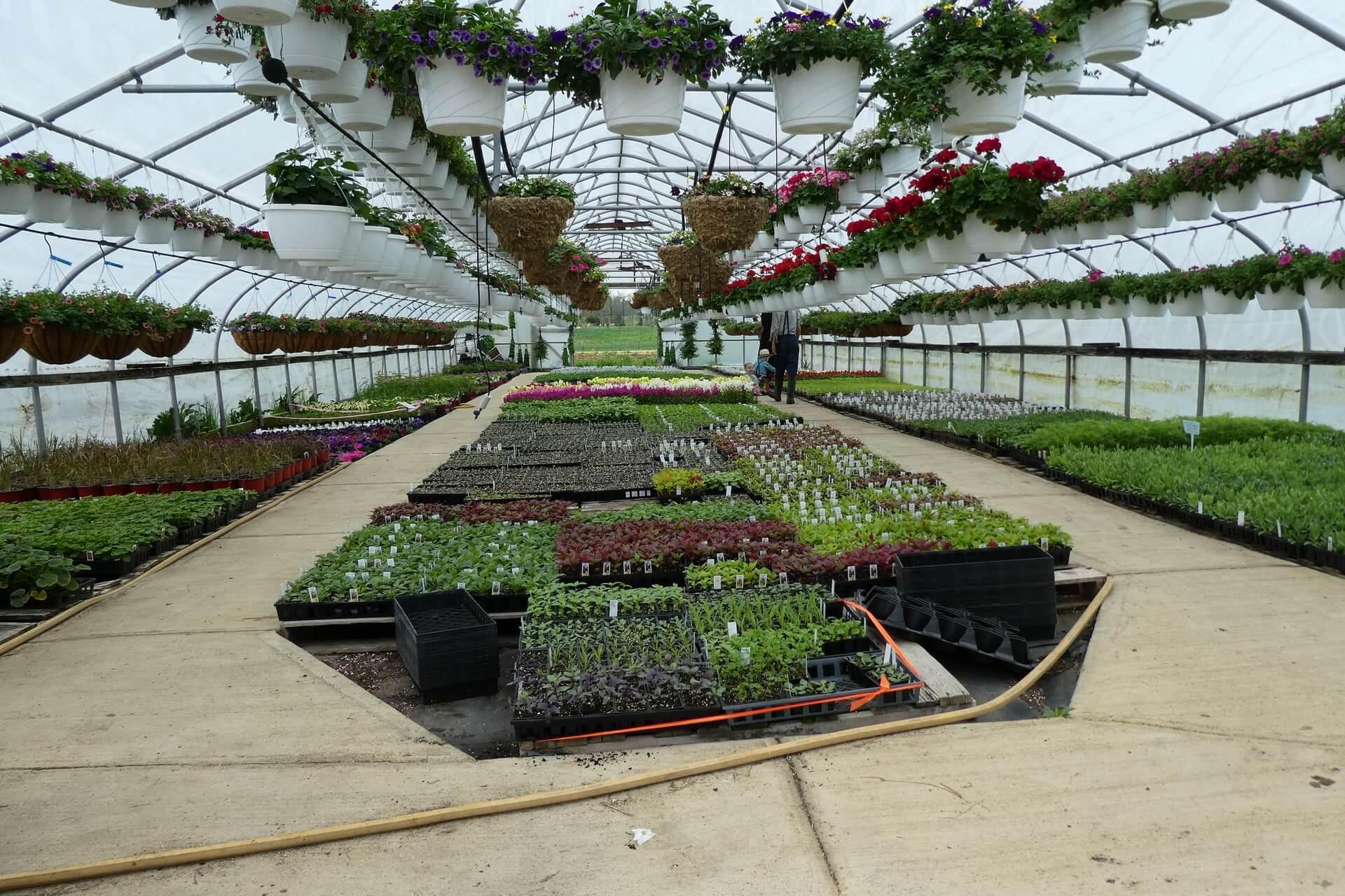 greenhouse-testimonial-header-background