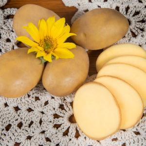 Kartoffelsorte Gwiazda mit HZ Zamarte
