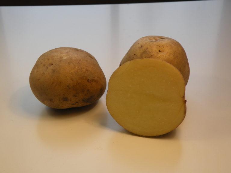 Kartoffelsorte Skawa mit HZ Zamarte